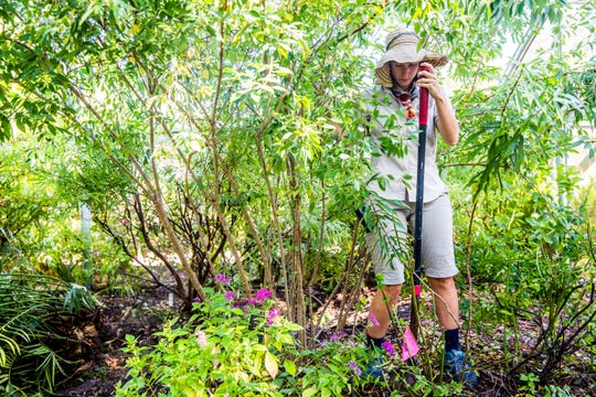 Gardener Katie Vance works in the butterfly house as a part of annual maintenance at the Naples Botanical Garden on Wednesday, Sept. 19, 2018. The gardens will be reopening on Oct. 1.