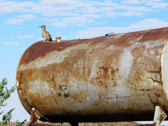 roadrunner on tank