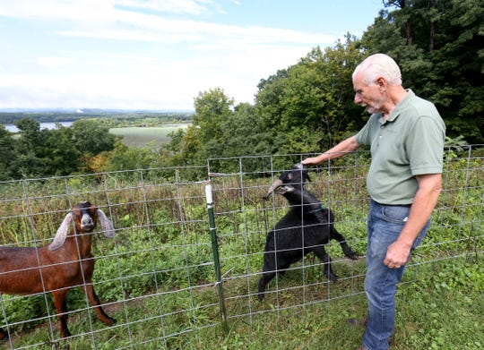 Two goats check in on Larry Cihanek of Green-Goats at Bard College's Blithewood Estate in Annandale-On-Hudson  on September 18, 2018.