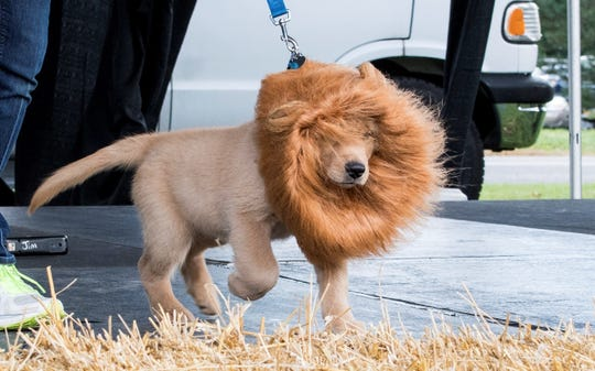 You don't have to wait until Halloween to have some costume fun with your pet.