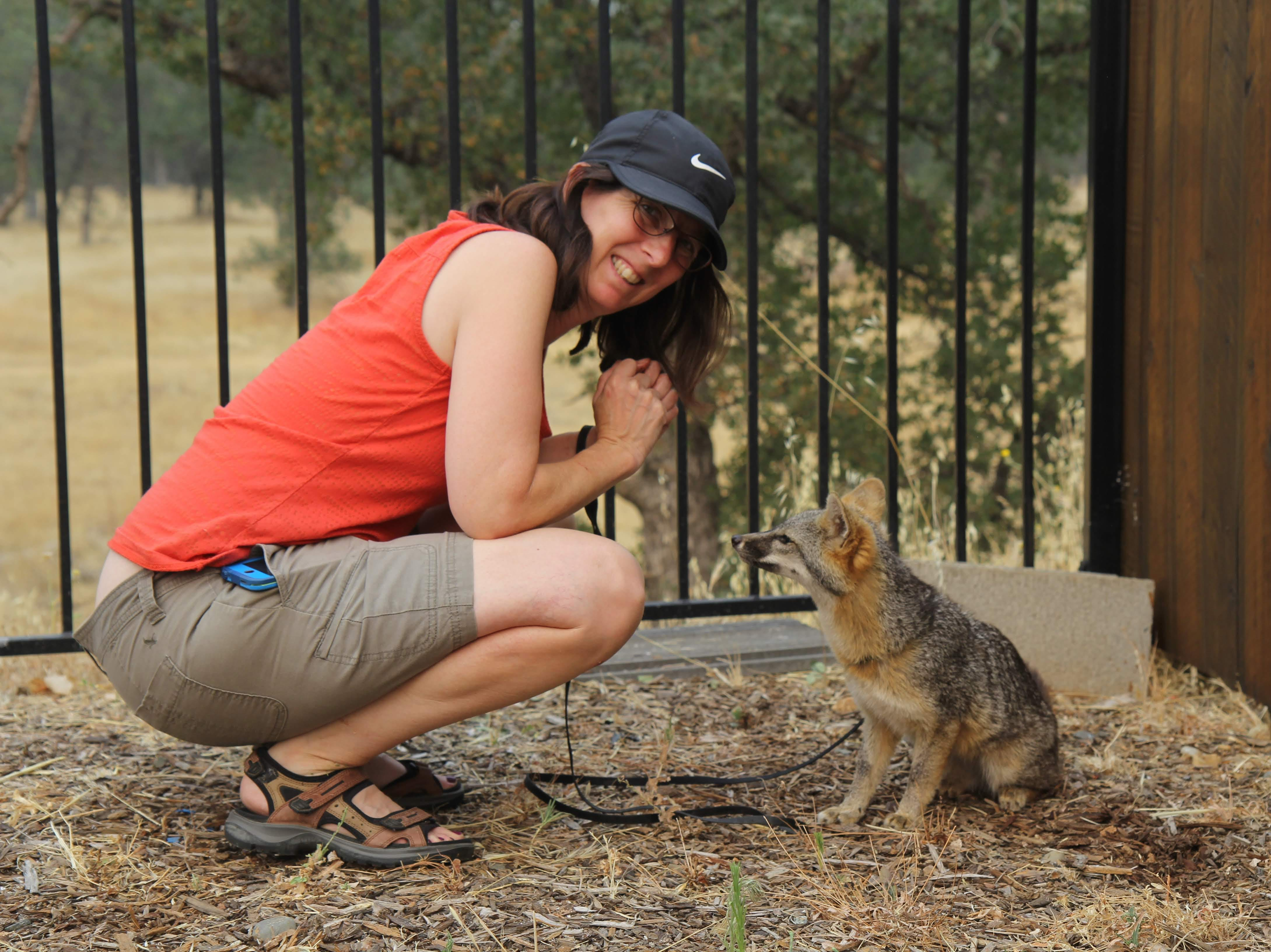 Animals curator Sharon Clay takes Inali the gray fox for a walk.