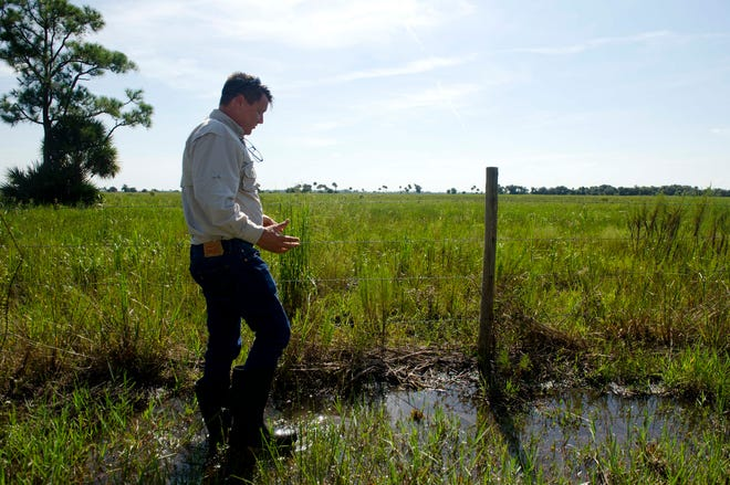 Garrett Wallace Jr., director of governmental and regulatory affairs for Alico Inc., checks out land the company has proposed for a water farm in September 2015 near Clewiston.