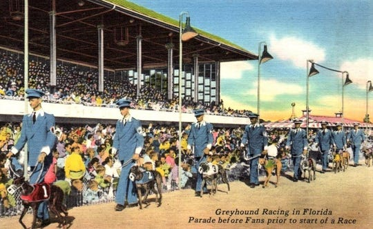 Greyhound dog racing in Florida in the 1950s.