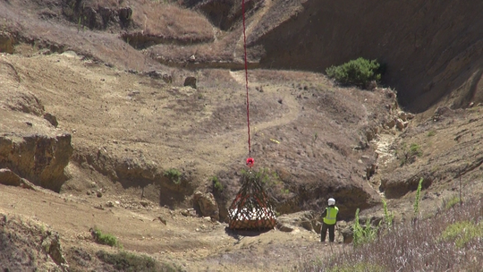 This week, a 500-pound sea cow fossil was loaded into a crate and airlifted out of a ravine on a remote island off Ventura.