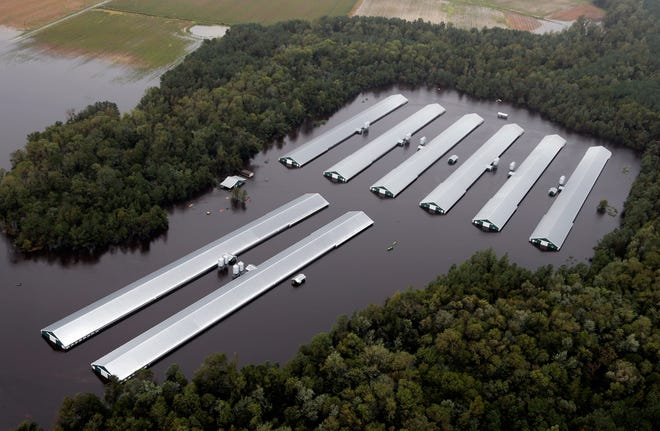 Chicken farm buildings are inundated with floodwater from Hurricane Florence near Trenton, N.C., Sunday, Sept. 16, 2018.