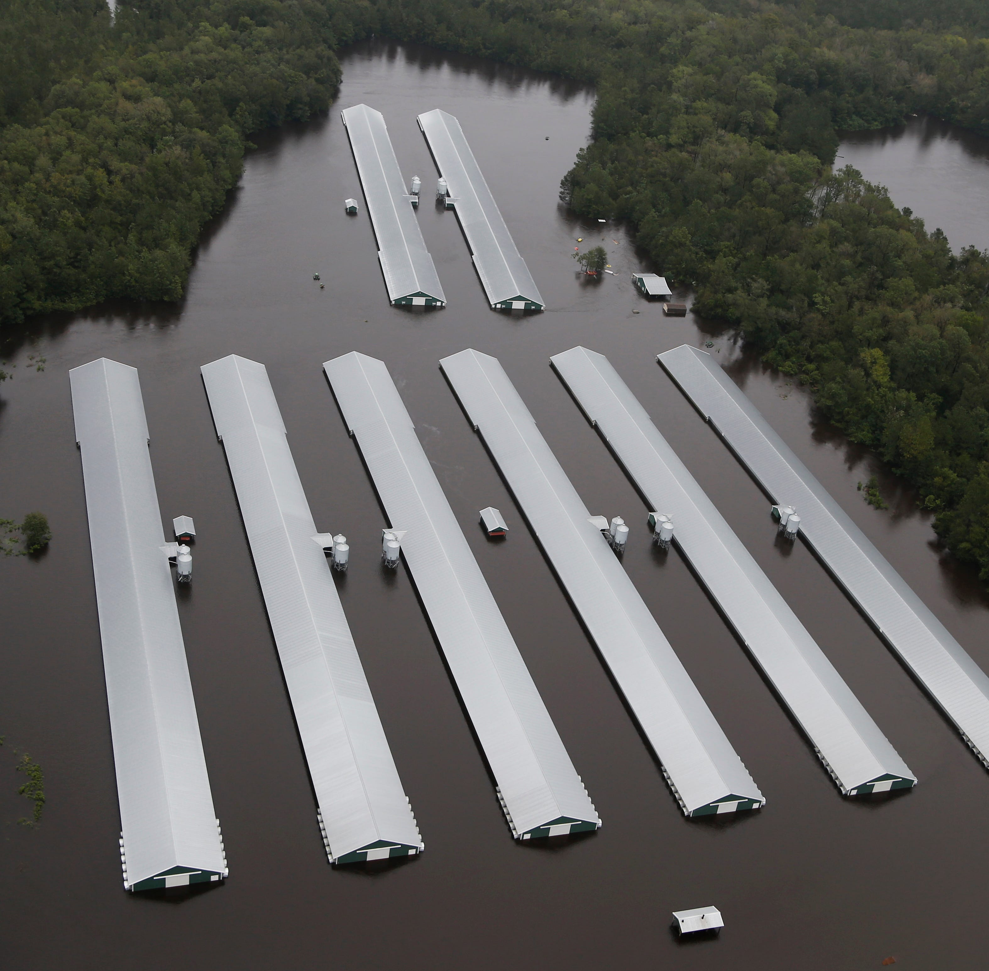 Poultry companies assess losses, help with hurricane relief