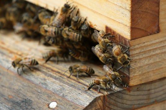 Ocean Medical Center Bees