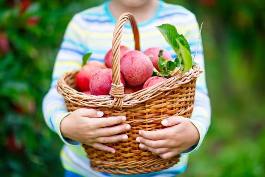 Visit the Harvest Festival at Olde Stone Village in Washington Township.