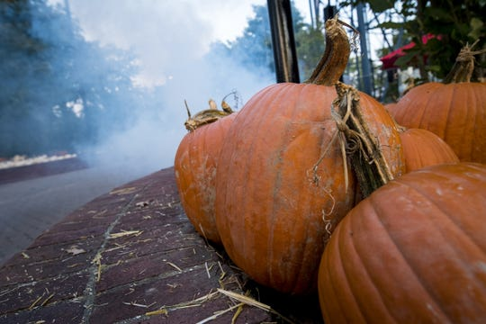 Pumpkins and fog at Kings Island.