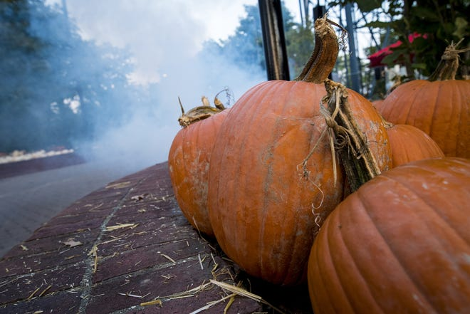 Delhi Township will host a new fall festival later this month in Story Woods Park. (File photo)