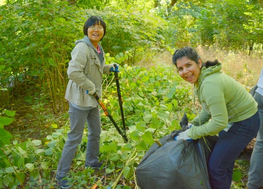 Volunteers can help manage invasive plants by joining the WRIP strike force.