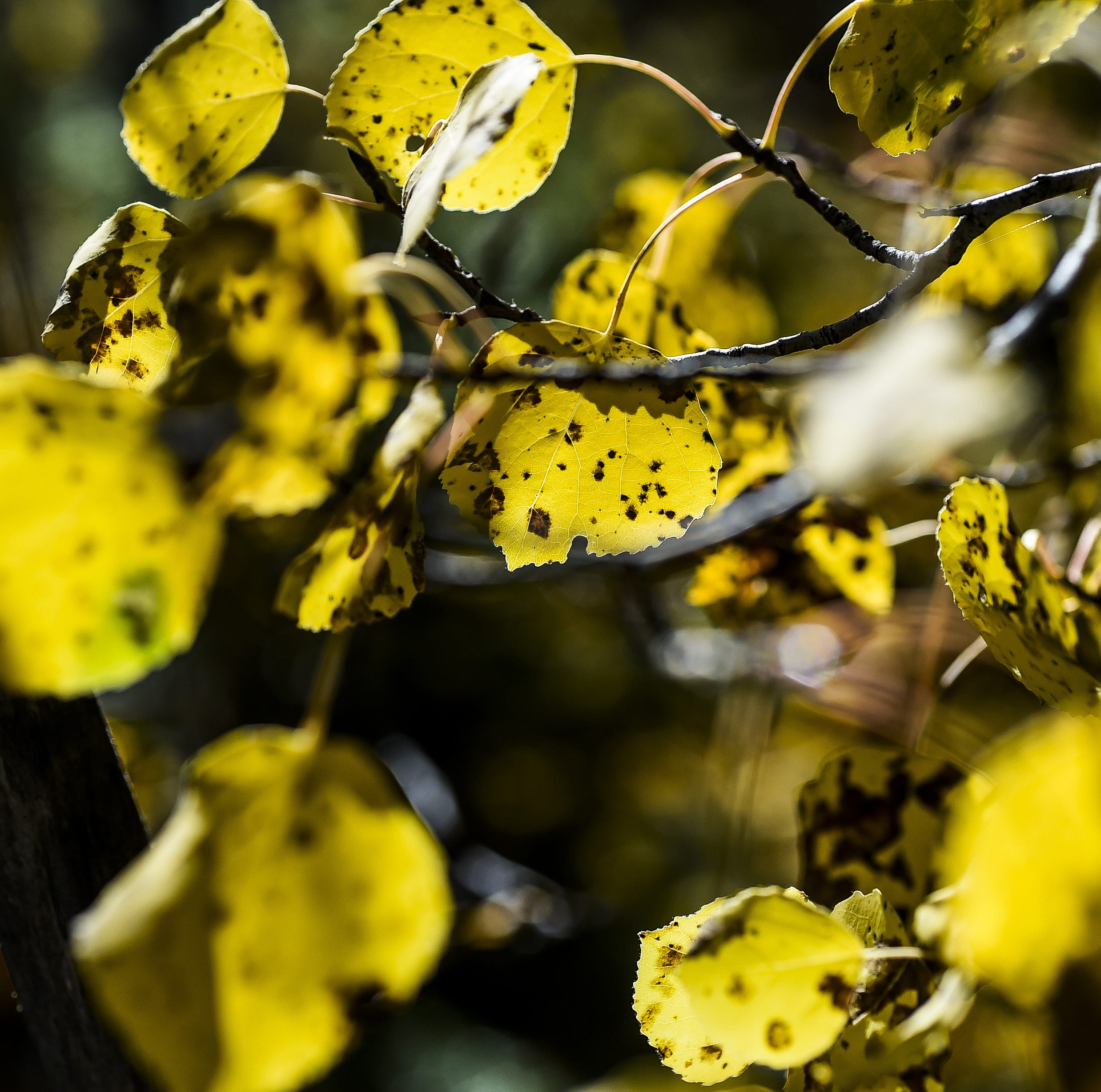 Hello, autumn! Forecasters predict a warm, wet fall for Fort Collins
