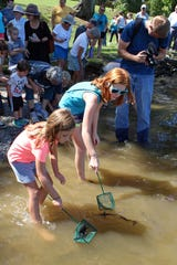Children helped release 1,000 lake sturgeon near Kingston, Tennessee, on Saturday.