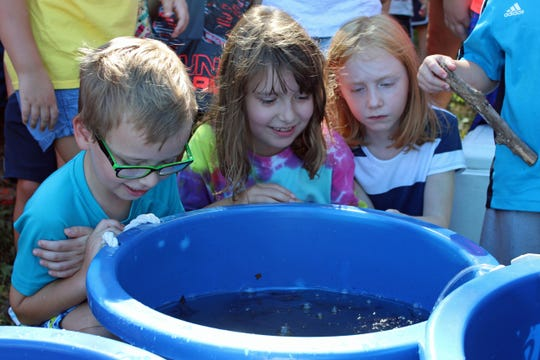 The release at the John Muir Festival gave more than 100 people a chance to see baby lake sturgeon up close.