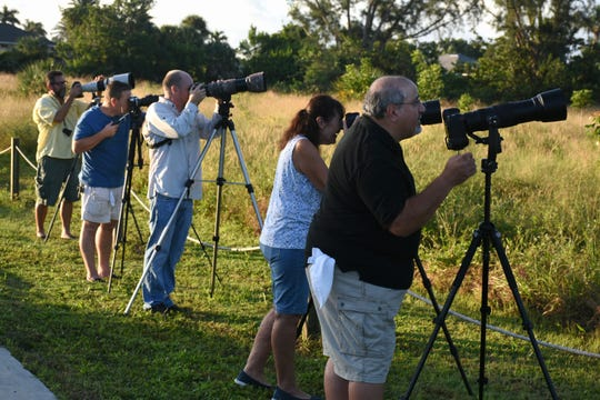 "Photographers ""shoot the birds"" just after sunrise Wednesday. The Eagle Cam at the Marco Island Nature Preserve and Bird Sanctuary is live, just in time to watch a pair of eagles renovating the treetop nest."
