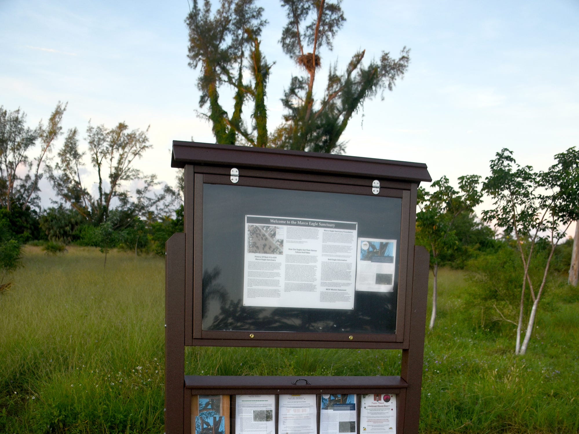 Inscribed pavers to help support the project are for sale. The Eagle Cam at the Marco Island Nature Preserve and Bird Sanctuary is live, just in time to watch a pair of eagles renovating the treetop nest.