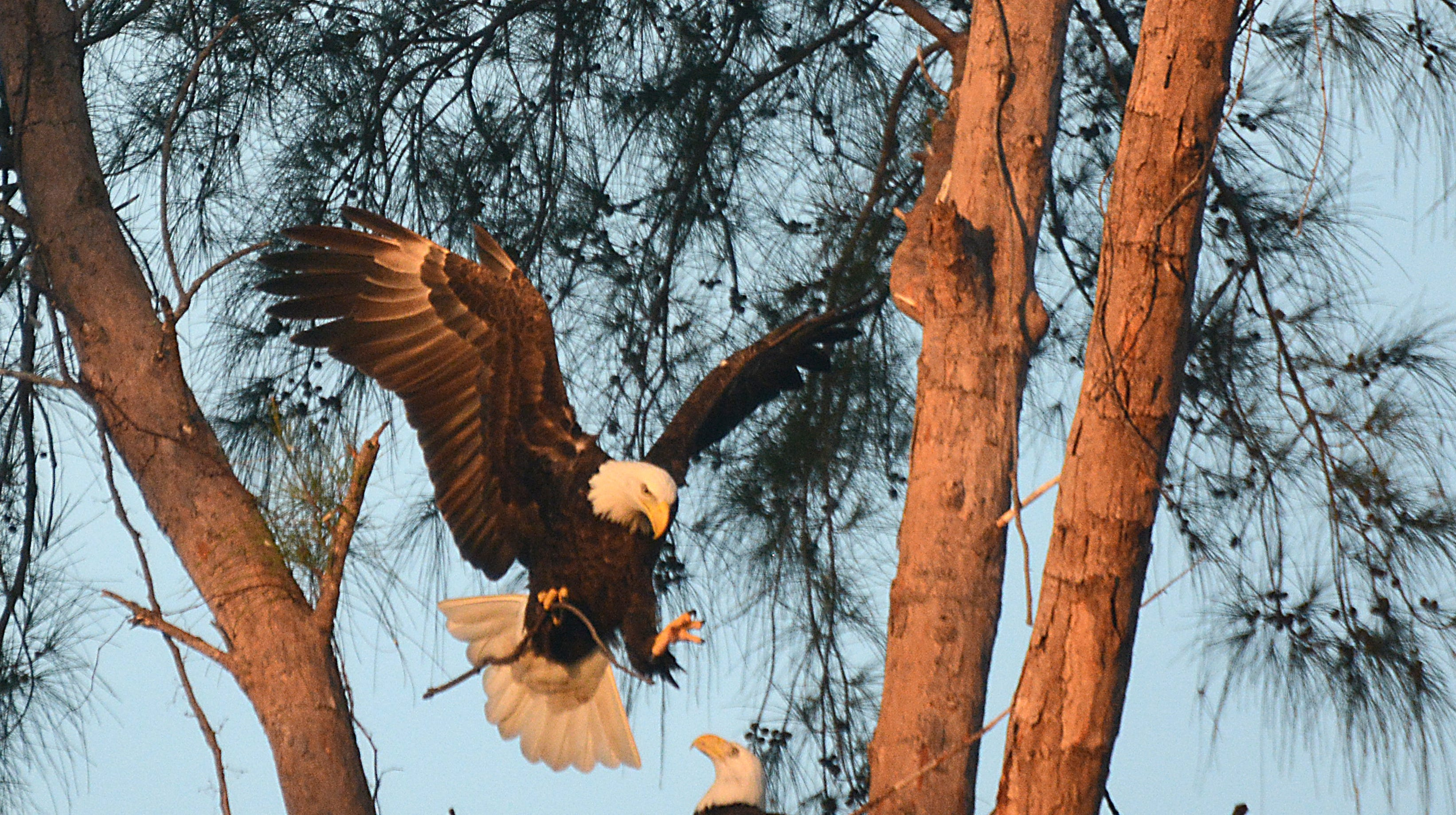 The Eagle Cam is live, and just in time. Over a year after they originally planned to be up and running.