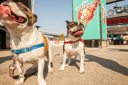 They'll let the dogs in (and other animals, too) at Fromm Petfest Saturday on the Summerfest grounds.