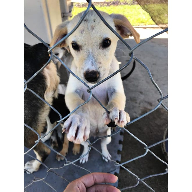 Operation Bring Animals Home is based in Pewaukee and working to rescue pets in North Carolina. So far, the rescue has helped move dozens of animals.