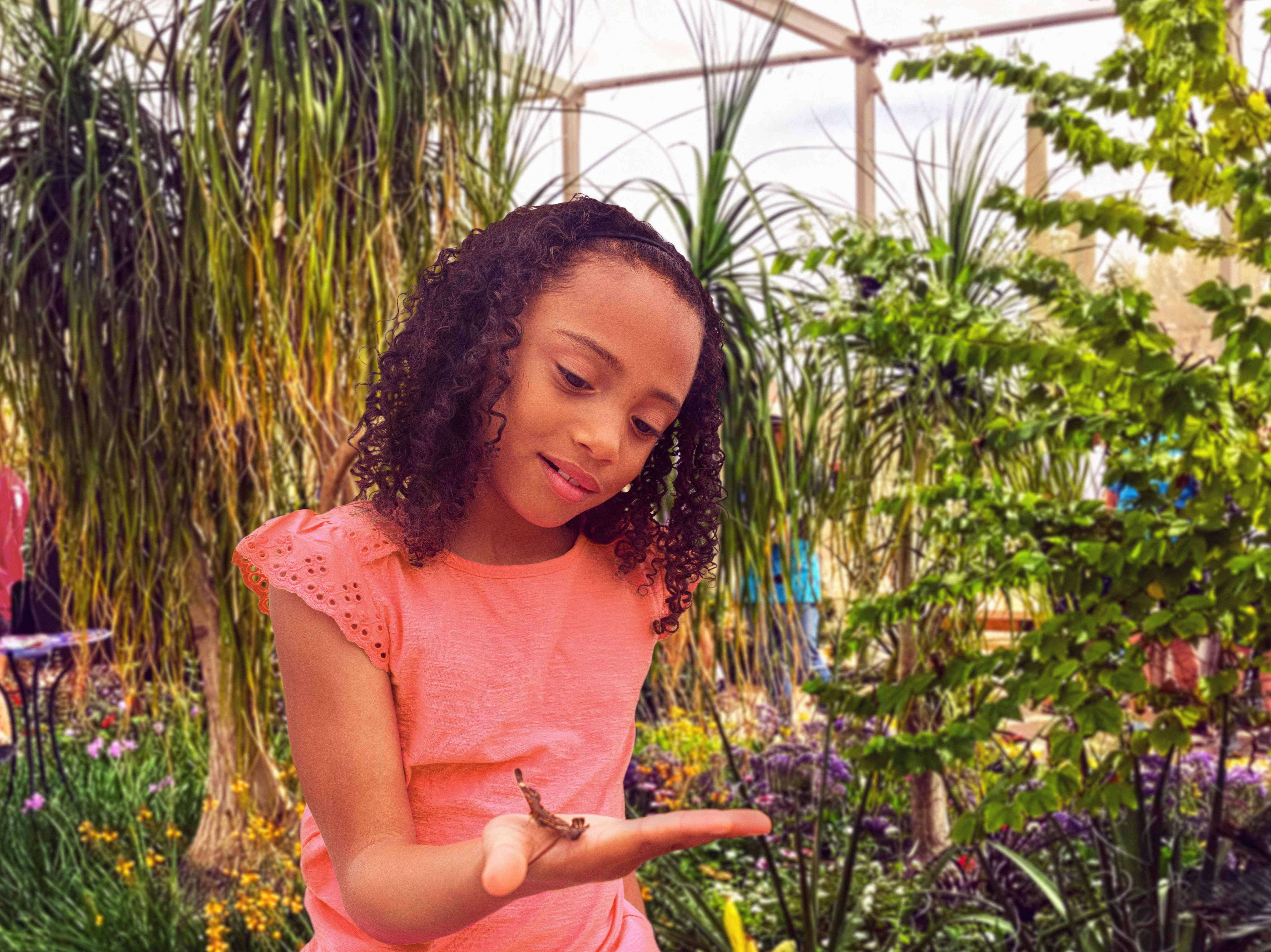 The Desert Botanical Garden's Fall Butterfly Exhibit educates the public on butterflies and offers an immersive experience.