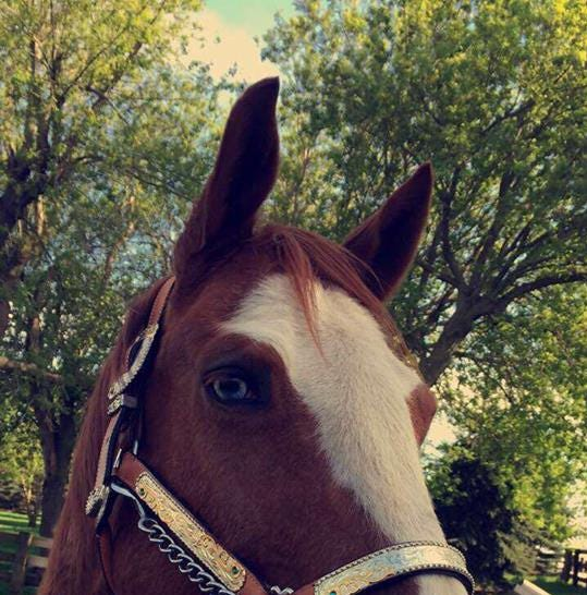 Zeus, a 5-year-old horse, died Sept. 11 in Maple Valley Township. His owner believes he was shot. Officials said a cause has not been determined.