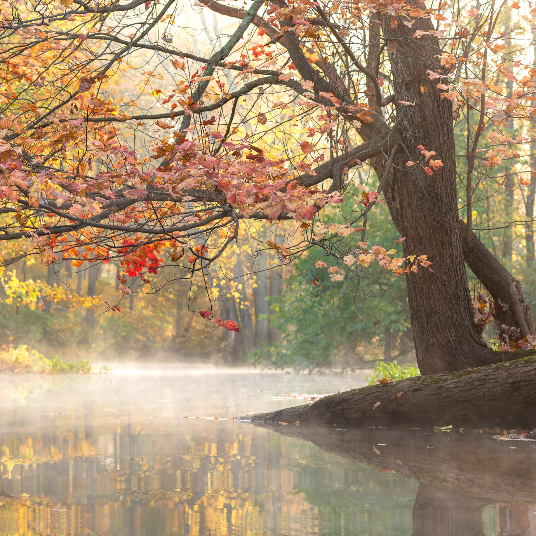 Beauty, mystery unfold inthe Great Swamp through the seasons