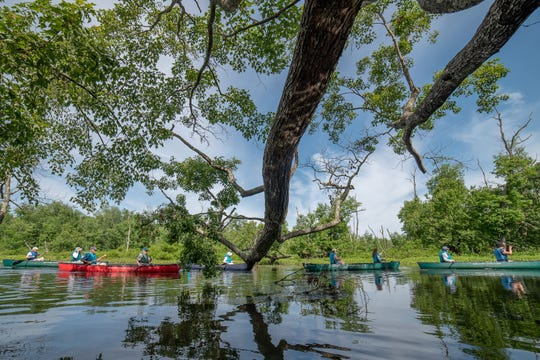 Kayakers take part in the spring paddle on the Great Swamp.