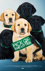 """Pick of the Litter"" is playing at Small Star Art House."