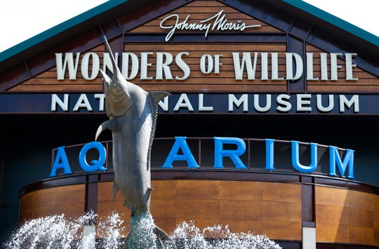 Wonders of Wildlife unveiled a bronze casting of a 1,000-lb. black marlin from Australia  to mark the one-year anniversary of WOW National Museum and Aquarium.