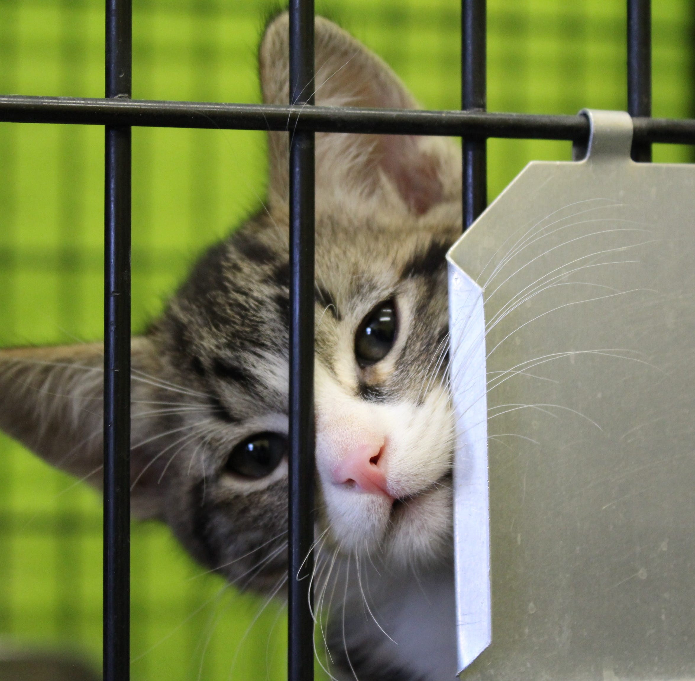 New animal shelter approved for Cedar City after 5 years of planning