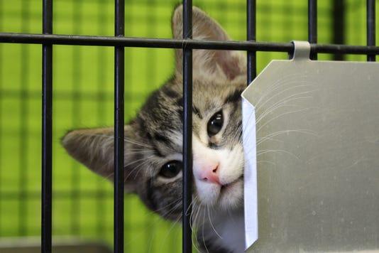 Animal Shelter Kitten
