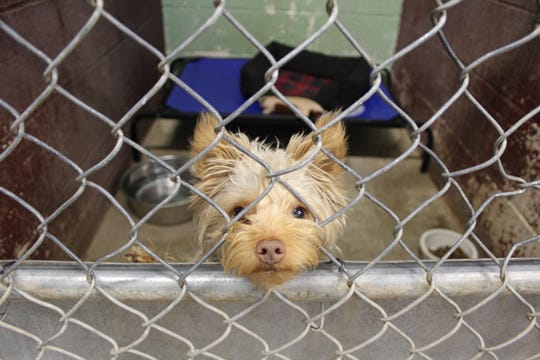 The new Cedar City animal shelter will have more kennels and a play area for dogs, officials say.