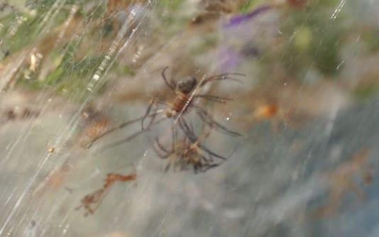 Spider Itself