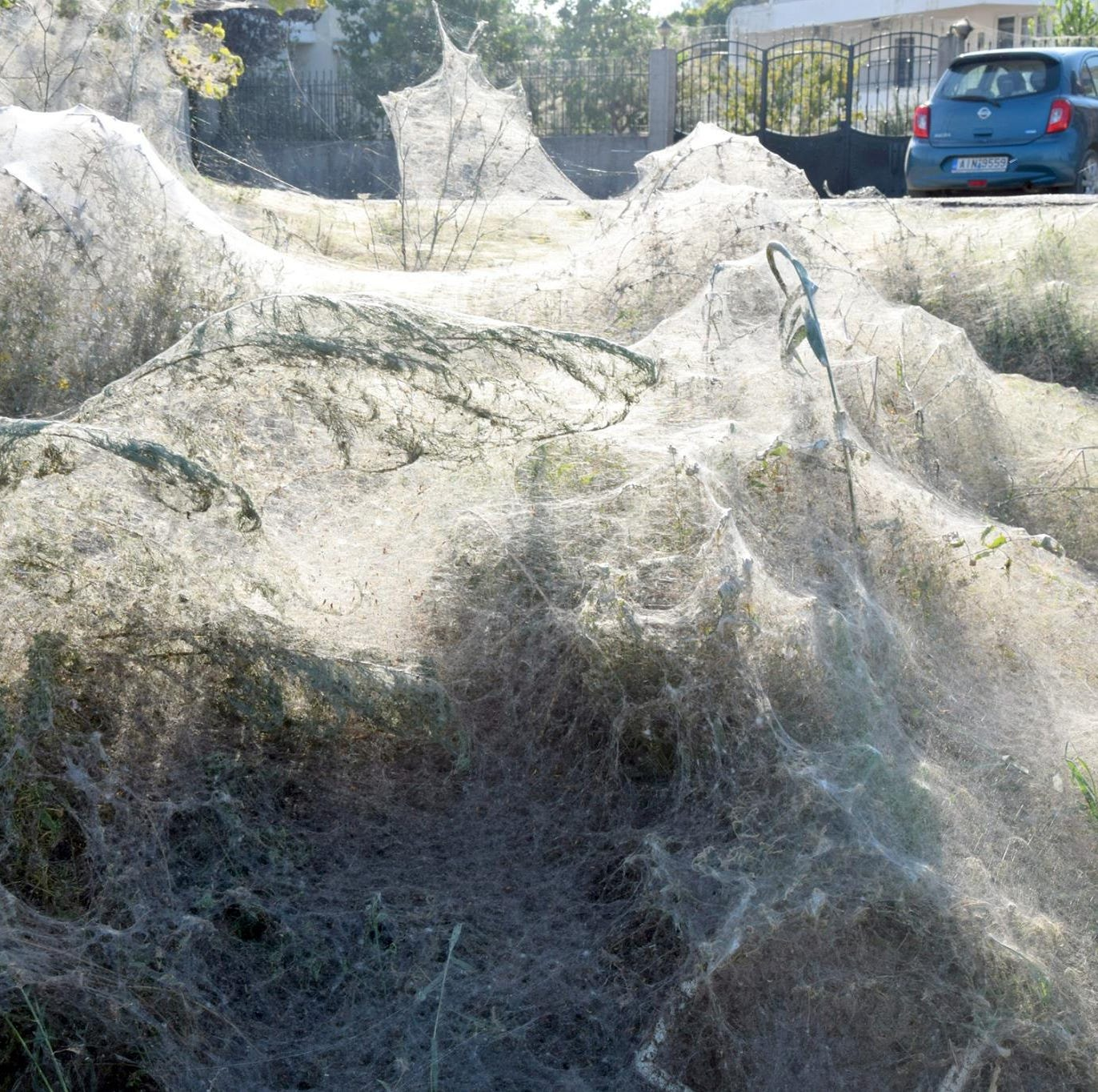 Massive spiderweb blankets Greek beach for spider sex 'party'