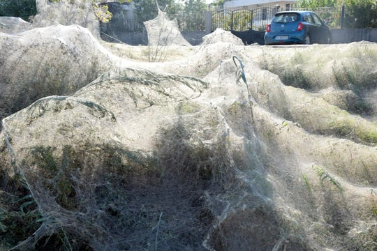 A massive spiderweb stretches across a beach in Aitoliko, Greece.