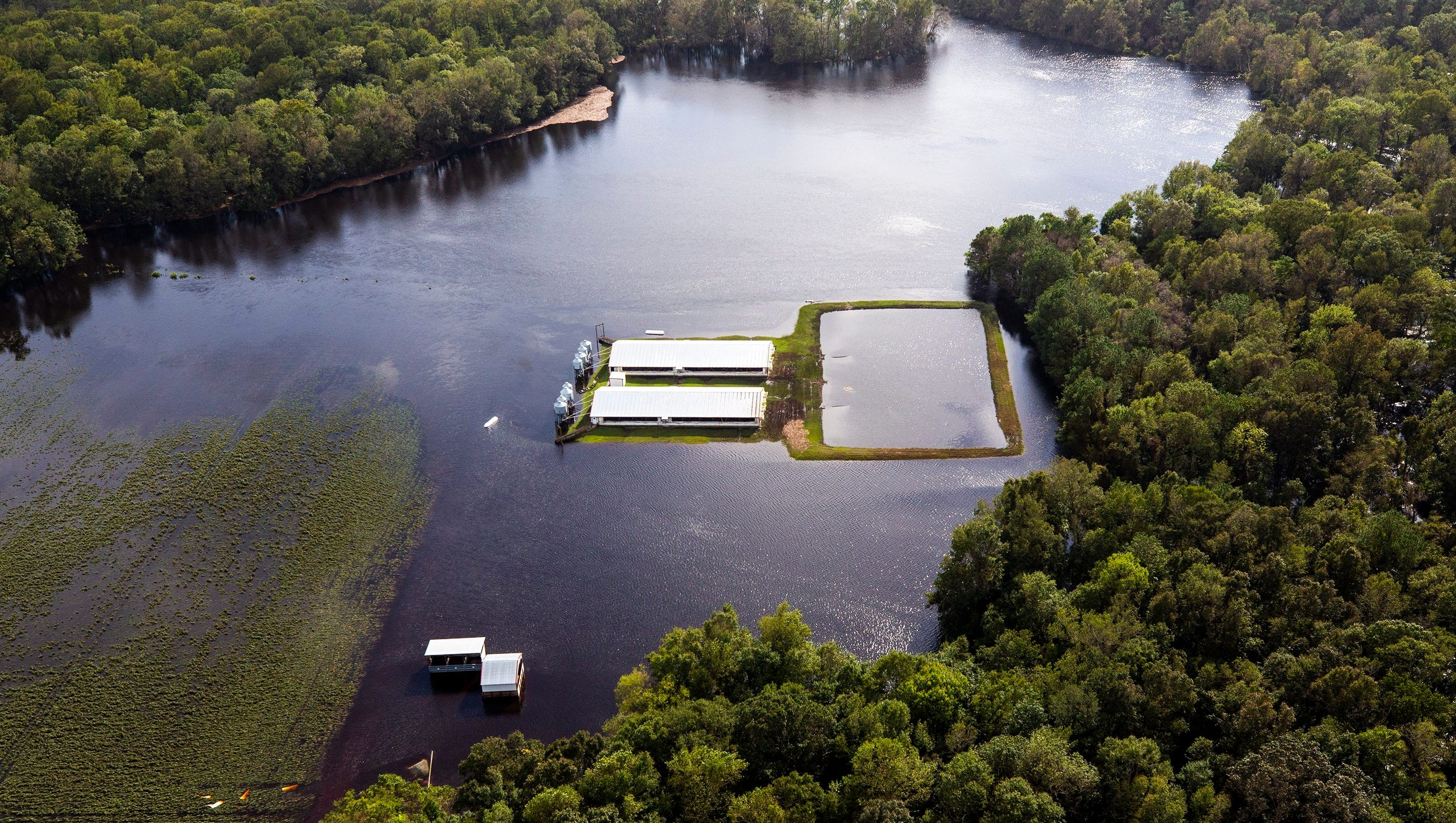 Hurricane Florence Flooded Pig Poop Lagoons Threaten North Carolina