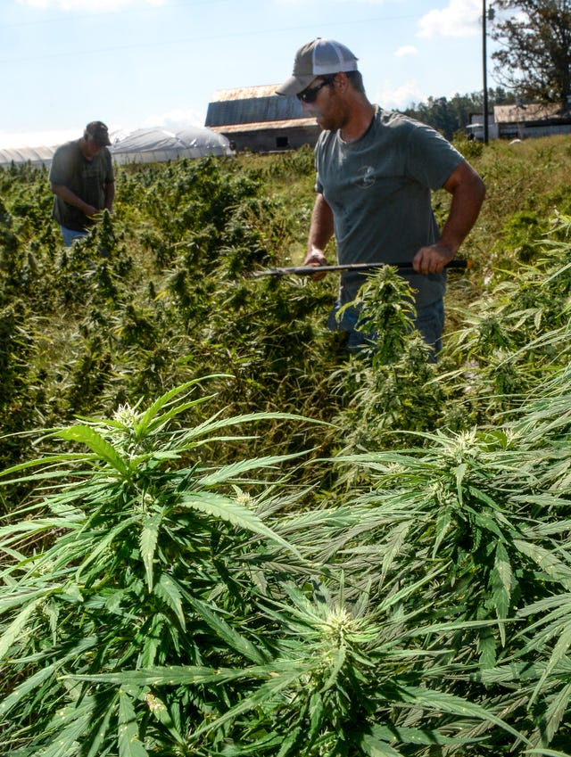 Upstate catches hemp fever, but this $1B industry is not without risk