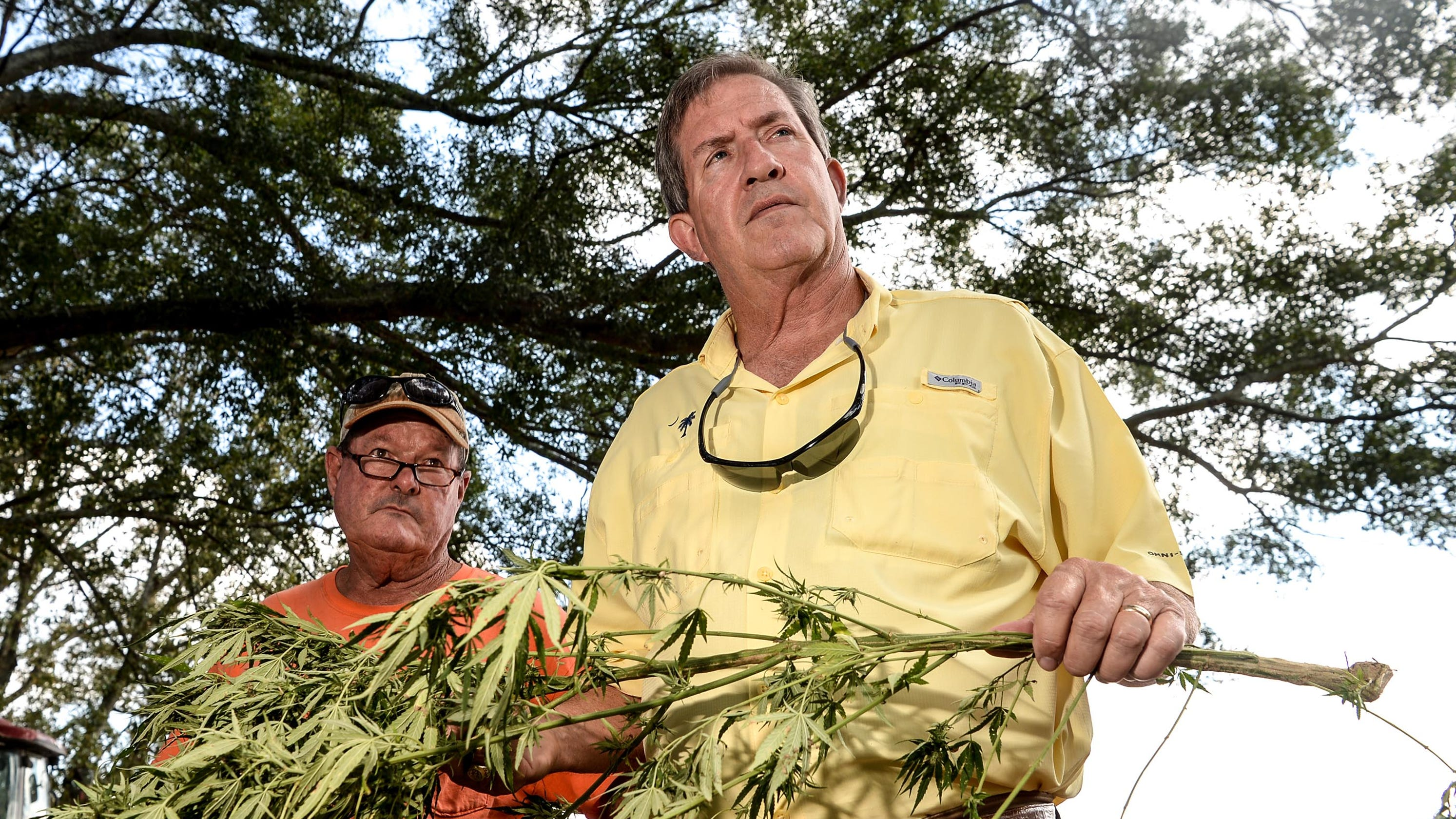 Upstate catches hemp fever, but this $1B industry is not