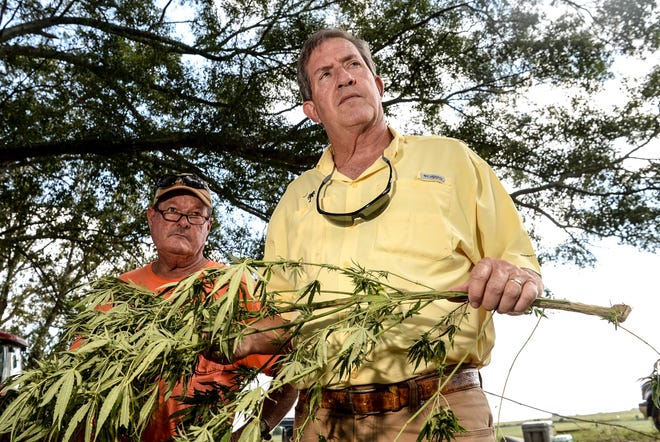 Tom Garrison, left, of Denver Downs Farm in Anderson, good friends with farmer Danny Ford, middle, speaks with Hugh Weathers, right, State Commissioner of Agriculture, during hemp harvest at the Ford farm in Central on September 21. Weathers has been visiting the first 20 hemp farms around the state to see how each is processing their plants.