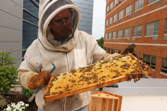 Beekeeper Greg Mazzatta with his bees at Ocean Medical Center.