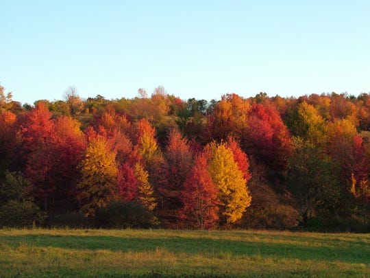 The fall foliage along Routes 38 and 38B between Endicott and Ithaca offer stunning colors.