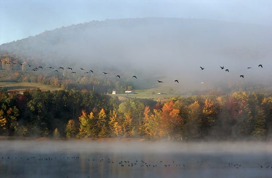Dryden Lake and its many walking paths offer some colorful fall foliage views in eastern Tompkins County. The lake also attracts migrating birds like this string of Canada geese flying above the lake at sunrise.