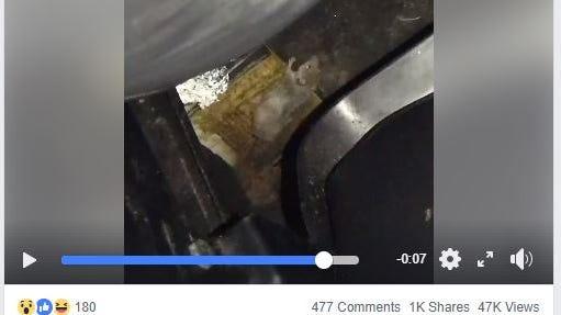 Video of mice at Corpus Christi movie theater circulates on social media