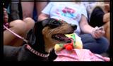 Running of the Wieners kicks off Oktoberfest Zinzinnati 2018