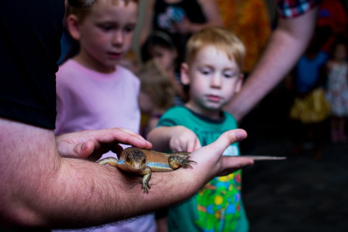 Landon, 5, and Trimble Breckin, 3, both of Clive touch a plated lizard named Niles on Thursday, September 20, 2018 at the Clive Public Library's Zoo Show and Tell in Clive.