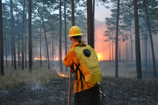 Austin Dixon with the Tall Timbers Research Station and Land Conservancy carefully monitors a prescribed fire.
