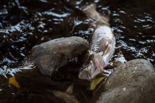 20180921 Deadpoudrefish