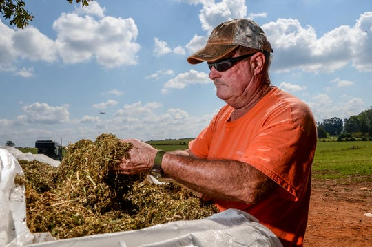 Tom Garrison looks at ground up hemp plants during harvest at the Danny Ford farm in Central on September 21.