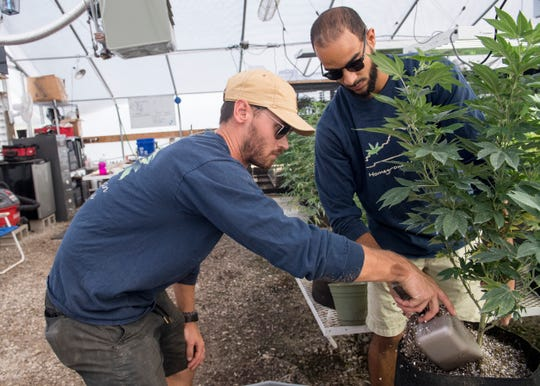 President and CEO of Greenman Gardens, Alex Russell, left, and Coleman Tramill, right, transplants a hemp plant to a larger pot Sept. 18, 2018. As of early September Greenman Gardens had 7,600 plants in the ground with more in the greenhouses.