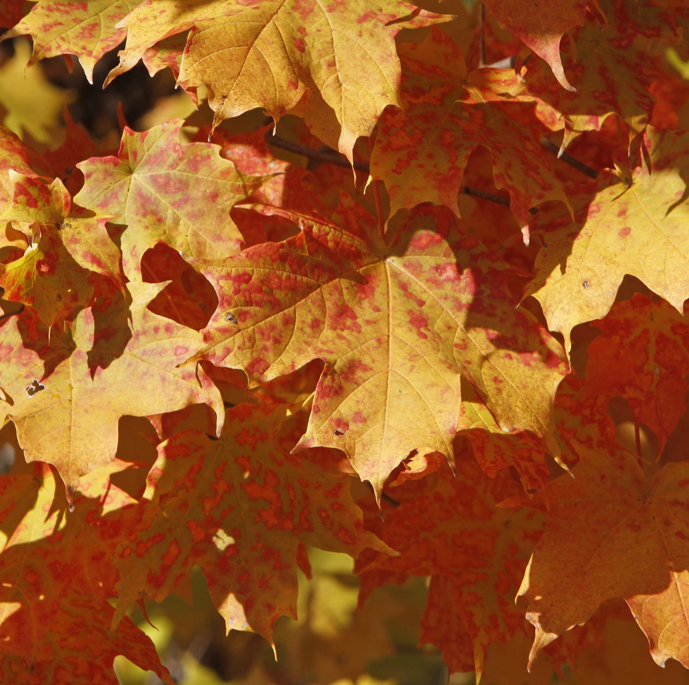 Saturday is the first day of fall – and it will finally feel like it